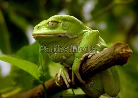drzewo zwierze zielony zwierzeta zwierzatka spojrzenie