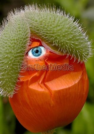 kwiat kwiatek zawod roslina zielony drzewa