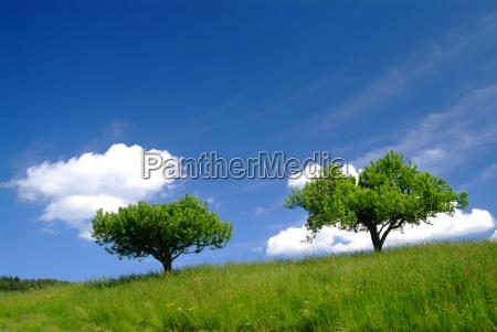 drzewo z nieba 3