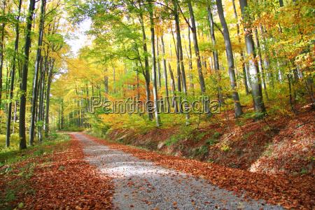 liscie stony sciezka puszcza las lesnictwo