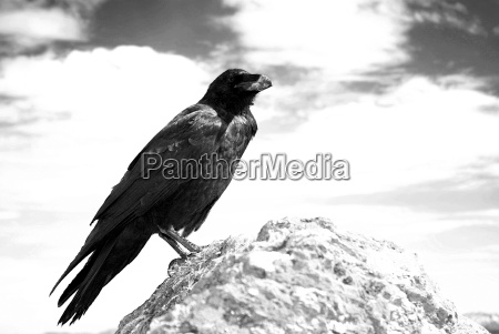 nie raven sw 2