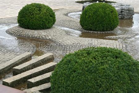 wodne kamienie rosliny