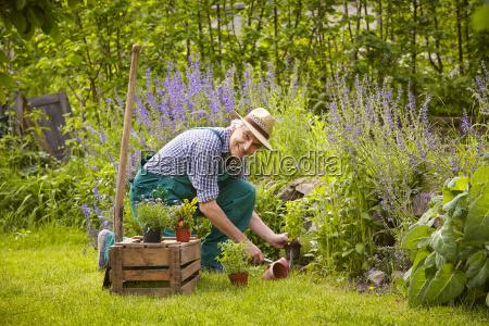 mezczyzna rosliny ogrodowe