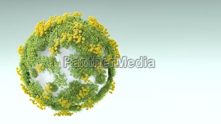 przyroda srodowisko kamien pestka kwiat kwiatek