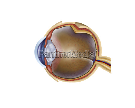 medycznych medycyna lekarski lekarskie medyczny oko