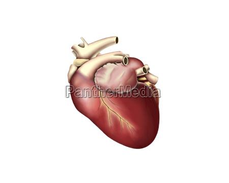 medycznych medycyna lekarski lekarskie medyczny muskul